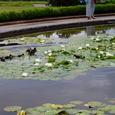 Botanicgarden002